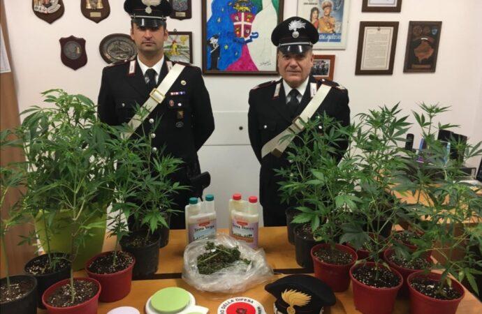 Coltivava marijuana in casa, arrestato dai carabinieri a Marsala