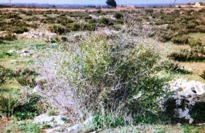 Rete Natura 2000, il comune di Mazara ottiene un finanziamento di 3 mln di euro