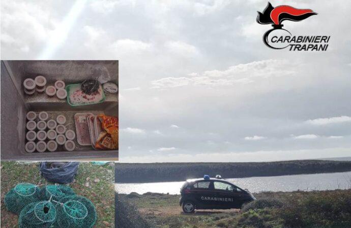Tre palermitani sono stati denunciati dai carabinieri per avere raccolto ricci nell'area marina delle Egadi