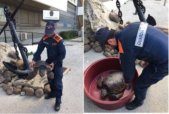 Mazara, soccorsa una tartaruga Caretta Caretta sulla spiaggia di Tonnarella