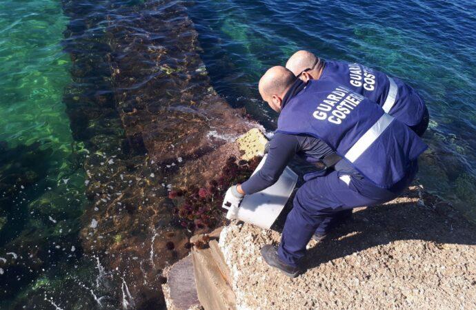 Sequestro di ricci effettuato dalla guardia costiera di Marsala