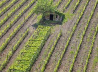 Mazara, il M5s e la Lega chiedono la riduzione o azzeramento dell'Imu agricola