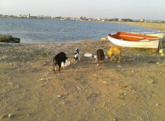Petrosino, i volontari dell'associazione Guardie Ambientali Trinacria si prenderanno cura dei cani di quartiere