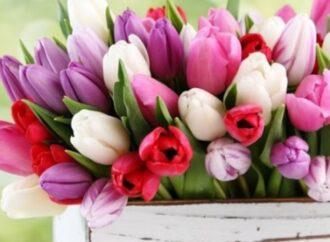 Mazara, un fiore a ogni defunto al cimitero comunale