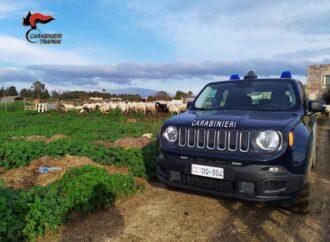 Un trapanese denunciato dai carabinieri per macellazione clandestina