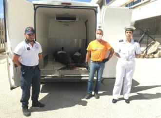 Mazara , un sequestro di tonno rosso effettuato dalla capitaneria di porto
