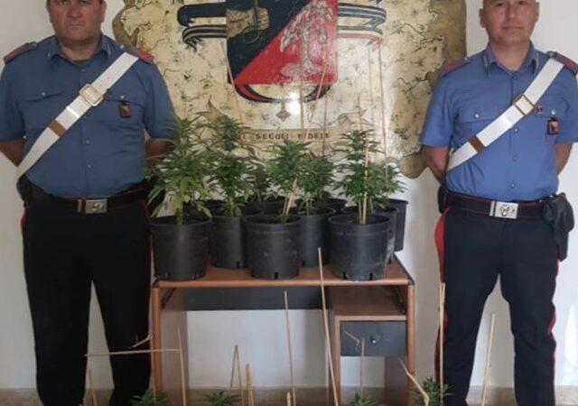 Un marsalese arrestato dai carabinieri di Petrosino per coltivazione di marijuana