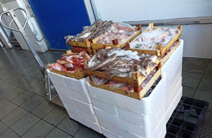 Mazara, 230 Kg di pesce sequestrati durante un controllo in piazzetta dello Scalo