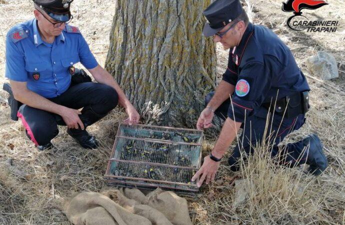 Castellammare, i carabinieri arrestano una persona per furto e maltrattamenti di animali