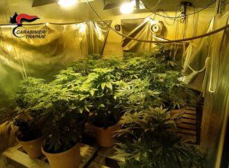 Spaccio di droga e coltivazione di marijuana, un 40enne arrestato dai carabinieri di Valderice