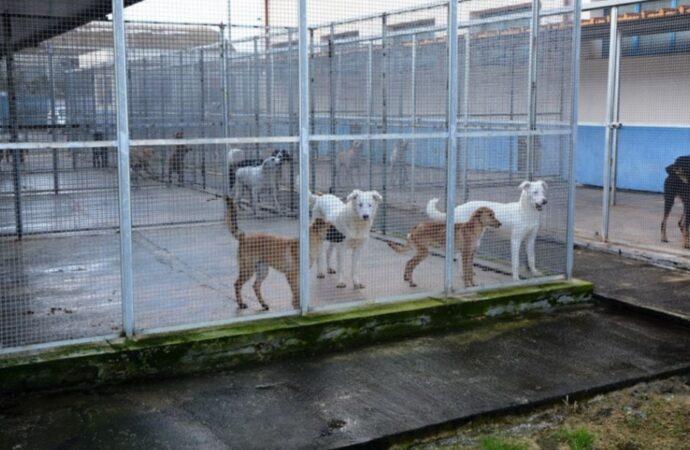 Mazara, il comune intende affidare la gestione del rifugio sanitario per i cani