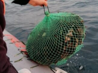 Mazara, sequestrati 800 ricci dalla guardia costiera