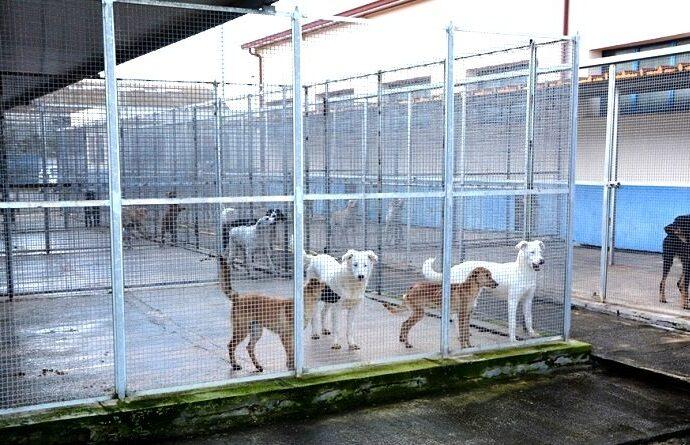 Mazara, potenziato l'impianto di allarme del rifugio sanitario per cani