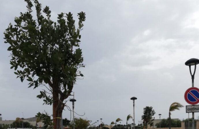 Nuovi alberi piantati a Petrosino