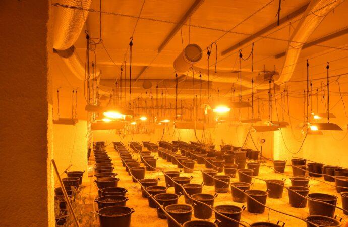 Salemi, la Finanza sequestra una piantagione di droga