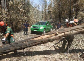 Incendi, in Sicilia 25 carabinieri forestali da tutta Italia a supporto delle forze già in campo