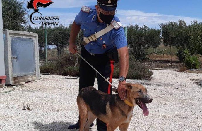 Salaparuta, un cane vittima di maltrattamenti salvato dai carabinieri