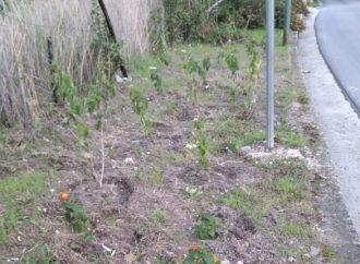 Salemi, al via interventi di verde pubblico